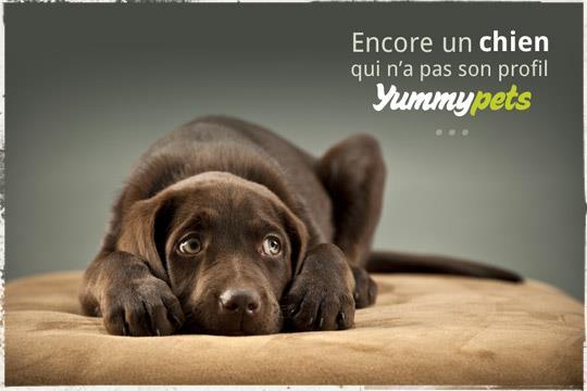 Publicité pour Yummypets représentant un chien triste de ne pas avoir son profil