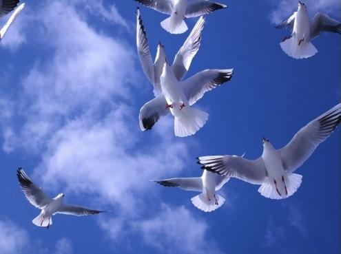 Oiseaux pris en photo en contre-plongée volant tous ensemble