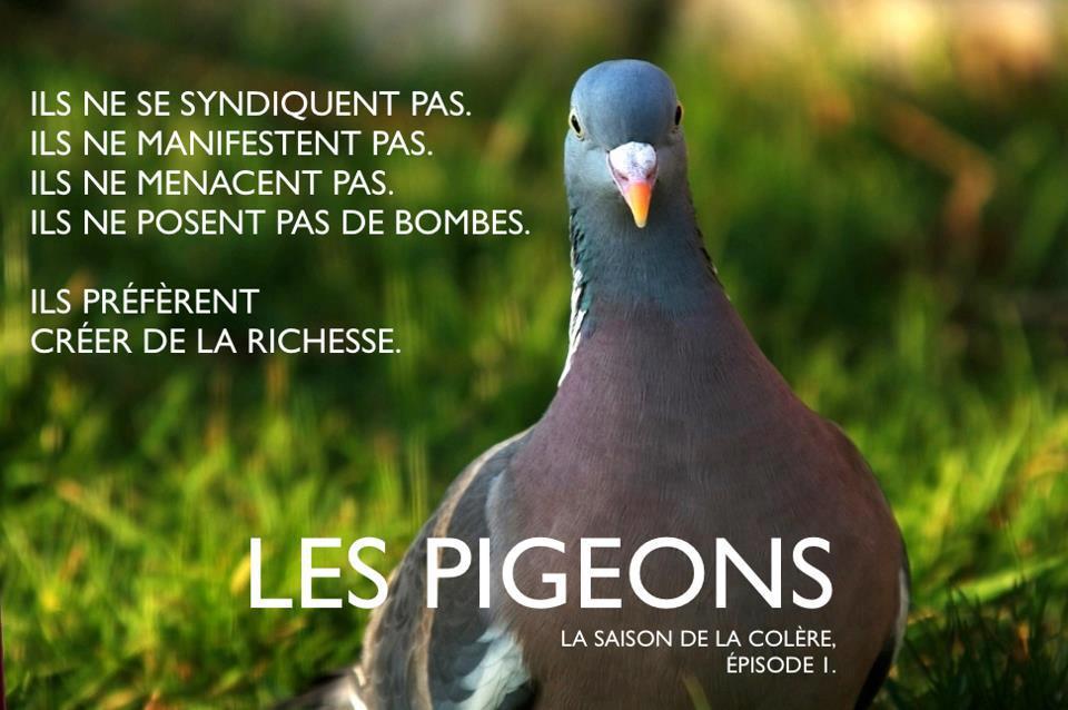 Affiche des pigeons - mouvement de protestation des entrepreneurs contre la loi sur la fiscalité 2012