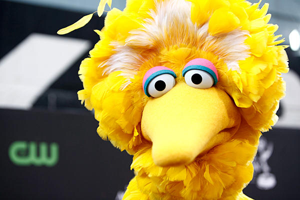Big Bird Presidential Elections