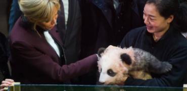 Brigitte Macron au zoo de Beauval ou la diplomatie du panda